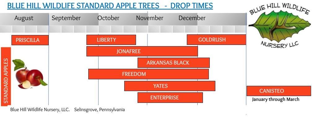 apple drop time chart
